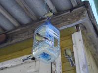 Кормушки из пластиковых бутылок своими руками: 70 фото и видео описание как сделать удобные и практичные кормушки